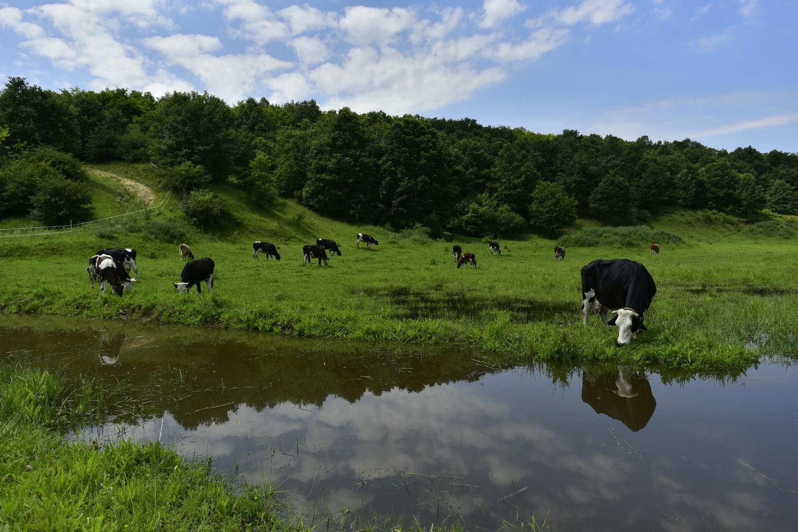Hétforrás Birtok - július blog - tejtermelő